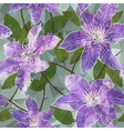 Seamless Floral Background with Blooming Clematis vector image vector image