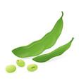 soybean pod green vector image