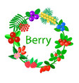 useful berries on white background vector image