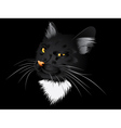 Black cat in the dark vector image