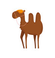 camel desert animal cartoon on white background vector image