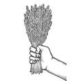 graphic hand with malt bunch vector image vector image