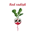 red radish vector image