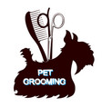 scissors and comb grooming dogs vector image vector image