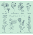 Set of Medical Herbs vector image vector image