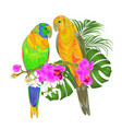 Sun conure parrots tropical birds