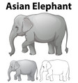 asian elephant in three sketches vector image
