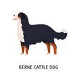 bernese cattle dog or berner sennenhund gorgeous vector image vector image