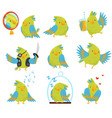 flat set of parrot in different situations vector image vector image