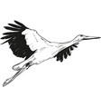 lying white stork vector image vector image