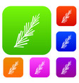 rosemary spice set color collection vector image