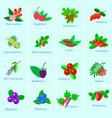 set of vitamin berries vector image