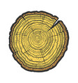 tree cross section saw cut sketch vector image vector image