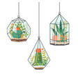 tropical house plants and cactus in hanging vector image