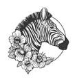 zebra head animal engraving vector image vector image