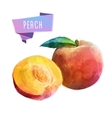 Peach hand drawn watercolor on a white background vector image vector image