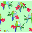 seamless pattern budgies sitting on branches vector image