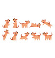 set of cute dogs pets domestic animals walking vector image