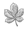 Chestnut leaf vintage engraved vector image vector image