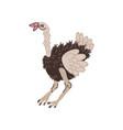ostrich wild exotic african bird vector image