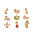 sloth animal cute cartoon character different life vector image vector image