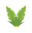 fern green tropical leaves cartoon vector image