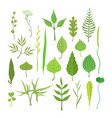 fresh green leaves from trees shrubs and grass vector image vector image