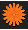 Orange flower on black background vector image vector image