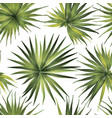 palm monstera seamless pattern vector image