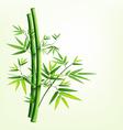 Bamboo green vector image vector image