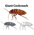 doodle animal for giant cockroach vector image vector image