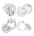 lettuce onions tomatoes and oranges draw vector image vector image