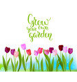 tulip spring banner vector image vector image