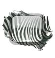 Zebra print for your design vector image