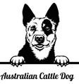 australian cattle dog - peeking dogs - breed face vector image vector image
