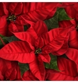 Poinsettia Flowers For Decoration vector image vector image