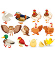 Different kind of birds vector image vector image