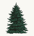 evergreen fir tree vintage colorful template vector image vector image