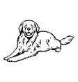 great pyrenees dog - isolated vector image vector image
