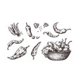 hand drawn chili pepper spicy seasoning sketch vector image