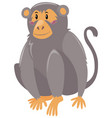 cute monkey on white background vector image vector image