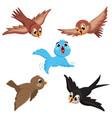of cartoon birds vector image