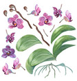 set of isolated watercolor orchids for your design vector image