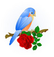 small songbirdon bluebird thrush and red rose vector image vector image