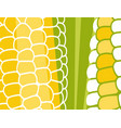 abstract vegetable design corn on cob vector image vector image