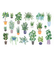collection of decorative houseplants isolated on vector image vector image