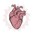 human heart anatomically correct tattoo art vector image vector image