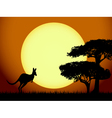 Kangaroo at sunset vector image vector image