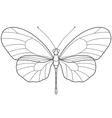 Outline Butterfly vector image vector image