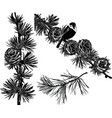 set silhouettes fir branches with cones vector image
